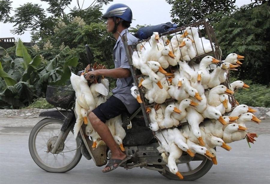 Российским туристам во Вьетнаме лучше не арендовать мотоциклы, фото: photoblog.nbcnews.com