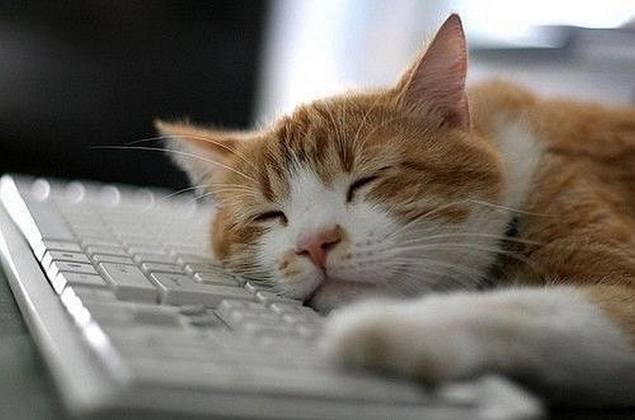 Иногда сон на рабочем месте приводит к серьезным последствиям, фото: murmiau.com