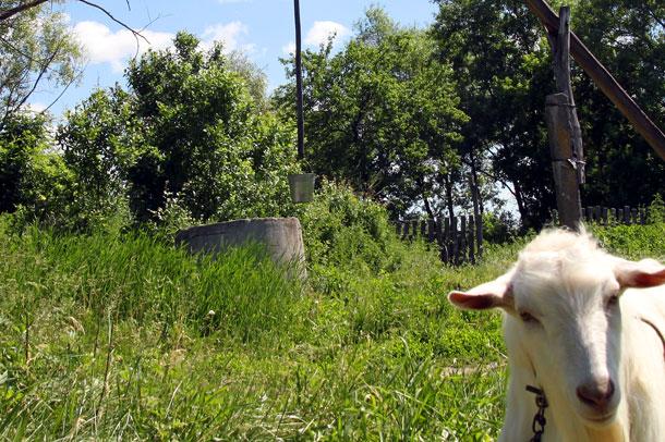 Кишечная палочка в колодце угрожает здоровью сямжан, фото: colpna.ru